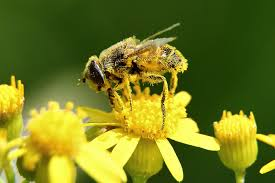 Flowers Bees Pollinate - come hither says plant the why files