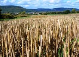 straw bale gardening strawbale or hay bale gardens