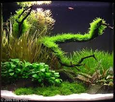 Aquascape Design Layout 838 Best Aquascaping Images On Pinterest Aquascaping Aquarium