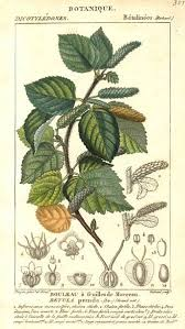 72 best alder tree magick images on magick witch and