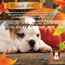 thanksgiving pet photos happy thanksgiving dog lovers natural dog company