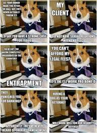 Lawyer Dog Meme - the best of the lawyer dog meme lawyer barking fc and dog