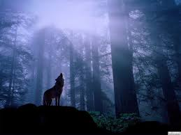 wolf moon starry blessings astrology
