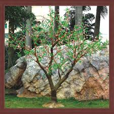 Decorative Trees With Lights Decorative Light Trees Wanker For