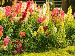 Spring Flower Garden Here U0027s How To Grow Your Own Bouquet With A Cut Flower Garden