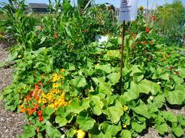 green gardening tips that bloomin u0027 garden