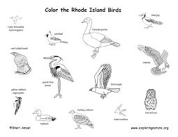 Rhode Island birds images Rhode island habitats mammals birds amphibians reptiles jpg