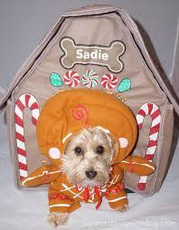 house dogs sadie u0027s gingerbread house yourdesignerdog