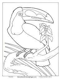 crafty bird animal coloring pages jungle safari homepage animal