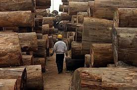 wood timber logs lumber for sale id 6682592 product