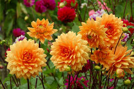 autumn flowers flowers by seasons all the year winter flowers spring flowers