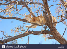 cat balanced on tree branches and surrounded by seed pods while