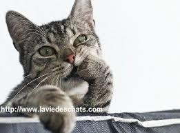 comment eviter les griffes de sur canape comment couper les griffes d un correctement