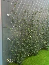 diy green wall using tensioned mesh and stainless steel fixings
