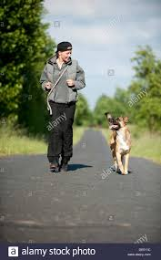 belgian shepherd los angeles dog jogging woman stock photos u0026 dog jogging woman stock images