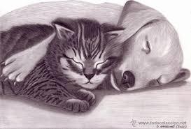 imagenes a lapiz de gatos dibujo hiperrealista perro gato una amista comprar dibujos