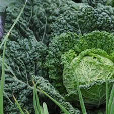 Garden Pests Identification - garden pests and diseases directory pest directory gardener u0027s