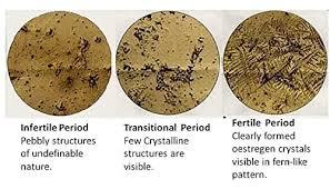 ferning pattern in spanish amazon com ovulation fertility scope saliva based bia lady q