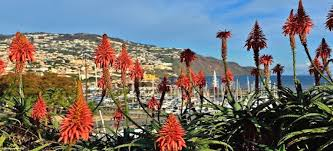 Madeira Flowers - top 10 madeiran flowers