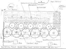 Orchard Layout  Plan Design Permaculture Garden  Orchard - Backyard orchard design