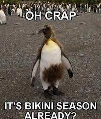Animal Memes Funny - animal memes oh crap funny memes