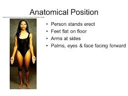 Picture Of Anatomical Position The Language Of Anatomy Ppt Video Online Download