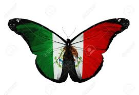 mexican flag butterfly flying isolated on white background stock