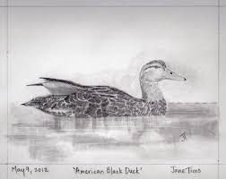 gallery of pencil drawings of animals nichepoetryandprose
