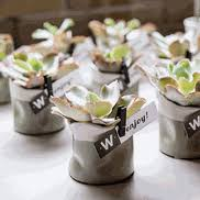 succulent wedding favors succulent wedding favors succulent containers