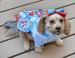 Halloween Costumes Yorkies Dorothy Wizard Oz Yourdesignerdog