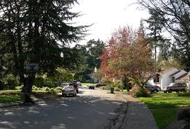 how to fill northeast seattle with more trees at no cost