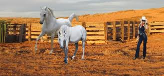 white mustang horse the lone rider and the mustang cowgirls images the lone rider
