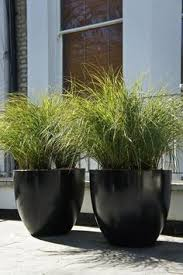 Modern Garden Planters Big Pots Of Grass Surely We Could Do This Garden Pots I U0027m