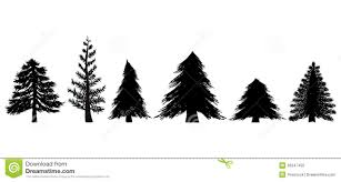 drawn fir tree evergreen tree pencil and in color drawn fir tree