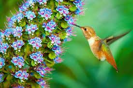 hummingbird free desktop wallpaper kemp macdonald 2017 03 24