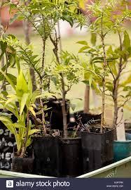 australis plants australian native plants native tree nursery stock photos u0026 native tree nursery stock