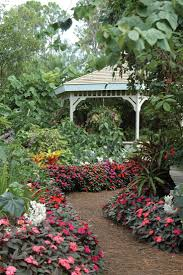 Florida Landscape Ideas by 91 Best Plants For Florida Images On Pinterest Gardening Plants