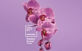 pink pantone pantone names fuchsia like u0027radiant orchid u0027 color of the year for 2014