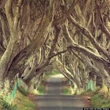 cool trees ireland s dark hedges is the most mystifyingly cool road ever huffpost