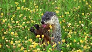 types groundhogs animals mom