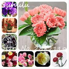 wholesale carnations carnations seeds online carnations wholesale seeds for sale