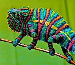 best 25 chameleons ideas on baby chameleon chameleon