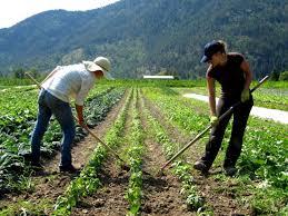 agricultural journalism jobs ukiah jobs internships land