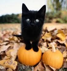 Kitten Halloween Costumes Pet 45 Amazing Cat Costumes Images Animals Funny