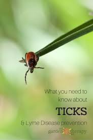 what everyone needs to know about ticks and lyme disease