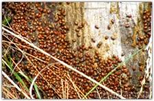 How To Find Ladybugs In Your Backyard Reasons To Not Buy Ladybugs Gardening