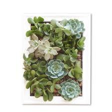 cuadro vivo con plantas suculentas de la tienda el hecho urbano cuadro vivo con plantas suculentas de la tienda el hecho urbano