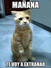 Kitty Meme Generator - ma祓ana te voy a extra祓ar sad kitty meme generator