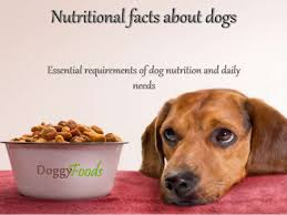 dog food nutrition facts dog nutritional requirements from doggyfoo u2026