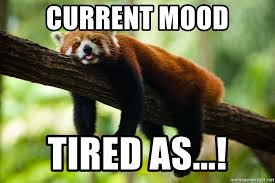 Exhausted Meme - current mood tired as exhausted cat bear meme generator
